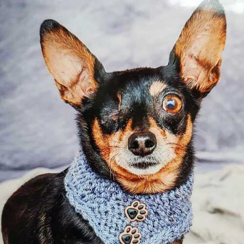 Doggystyle Hundemode | selbstgemachte Mode für Hunde